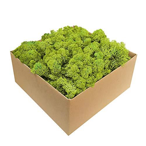 GJS Islandmoos - Moos in 1kg / 500g / 200g, versch. Farben - Echtes konserviertes Natur-Moos (Island) zum Basteln, Dekomoos für die Deko zu Ostern, Modellbau (hellgrün, 500g)