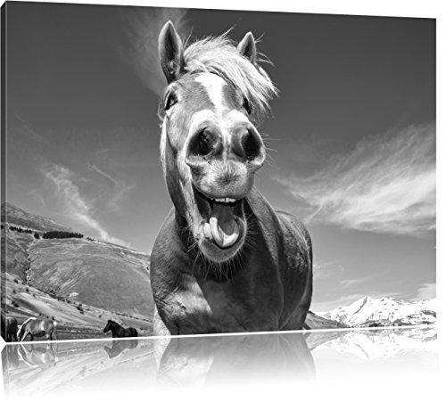 Pixxprint Pferd in der Natur als Leinwandbild | Größe: 80x60 cm | Wandbild | Kunstdruck | fertig bespannt