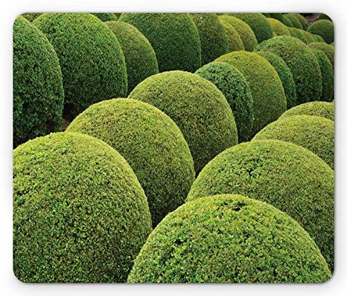 Lunarable Boxwood Hedge Mouse Pad, Grün Gartenbälle in Frankreich botanische Kunst Freizeit Garten Foto, Rechteck rutschfest Gummi Mauspad, Standardgröße, Gelbgrün
